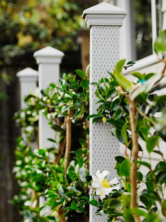 Learn how to create your own espalier, or living fence with this guide by Better Homes and Gardens. First you'll want to create the support for your espalier, then anchor each of the plants and train them by twisting a plant tie around the branches and the wire to secure them. Spruce up your outdoor décor by building a living fence. Let's get started!
