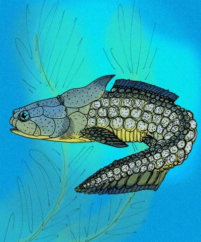 Palaeacanthaspis_vasta.jpg (400×483)
