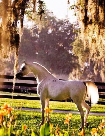 looks like it's out of a story book. beautiful arabian horse