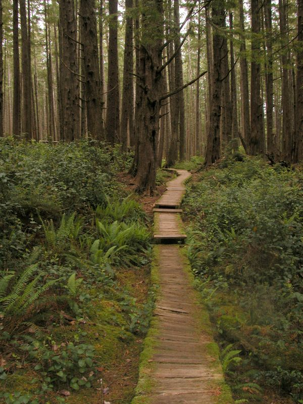 Olympic national park, Washington I may hate those slippery boards, but I love the path they take.