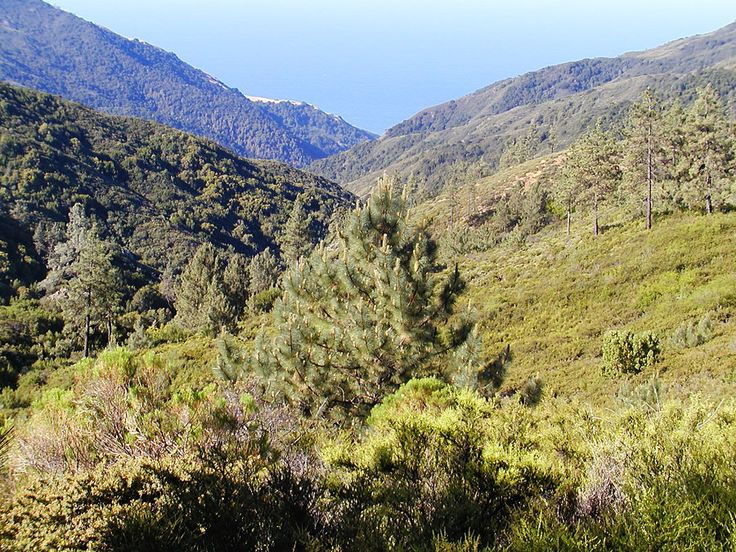 Northern Range Vegetation