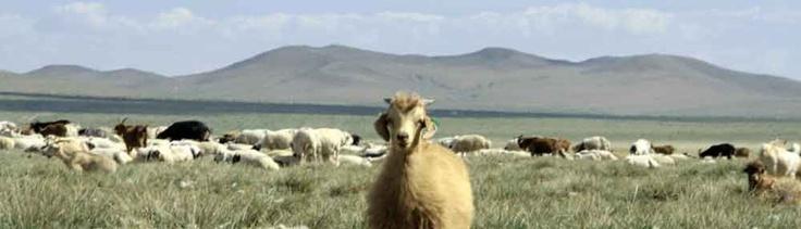 Onze blog is verhuisd naar www.mongolieblog.wordpress.com