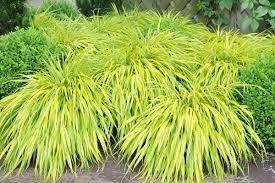 Травяной декор для сада. Часть 2 - декоративные травы, декор дачного участка, украшение дачного участка, травы