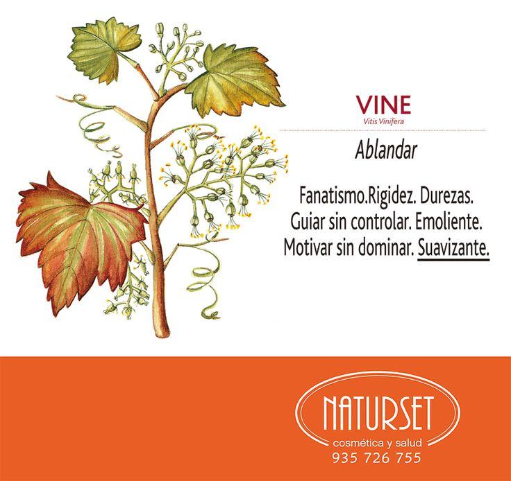 Vine: Ablandar...Flores de Bach de NATURSET