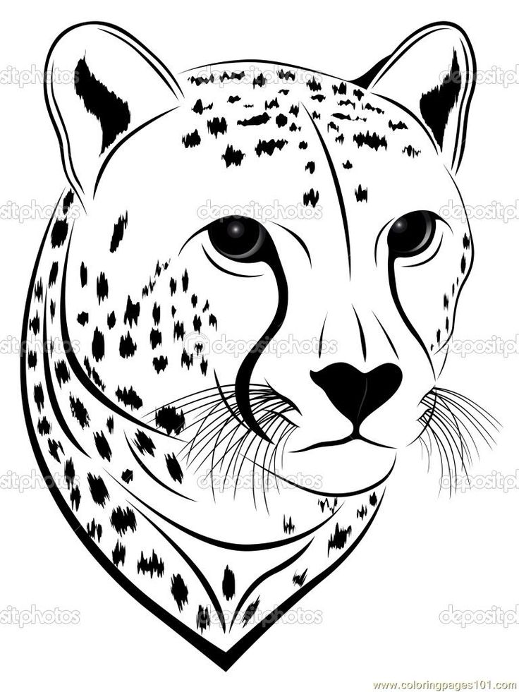 Coloring Pages Cheetah face Mammals