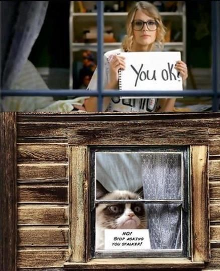 Grumpy Cat has a stalker.... you feeling grumpy, grumpy cat?