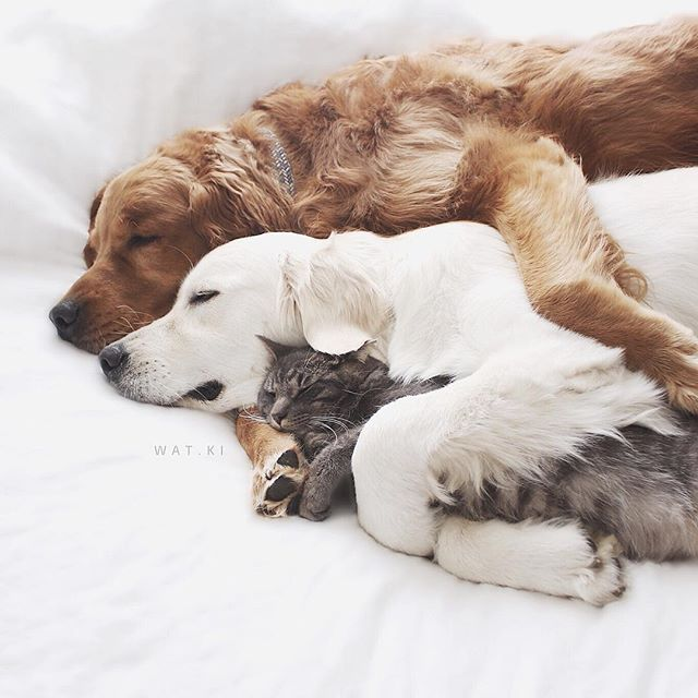 Sleepy cuddle time with your buddies :3