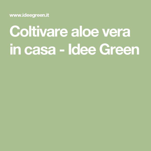 Coltivare aloe vera in casa - Idee Green