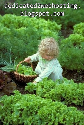 Never Lose Your sense of Adventure.: Little Girls, Sweet, Little Gardens, Little Country Girls, Make Money Online, Country Life, Gardens Design, Cabbages Patches, Kid