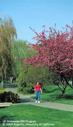 Grass, ornamental shrubs and trees