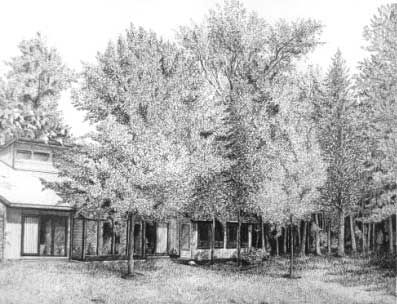Learn to Draw Trees in in Pen and Ink