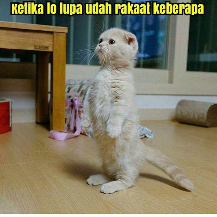 """28.8k Likes, 362 Comments - Dagelan Meme Humor Lucu Indo (@indowarkop) on Instagram: """" . Add juga official line @indowarkop di line!!! Id line : @indowarkop (pakek @ ya! ) jamin…"""""""
