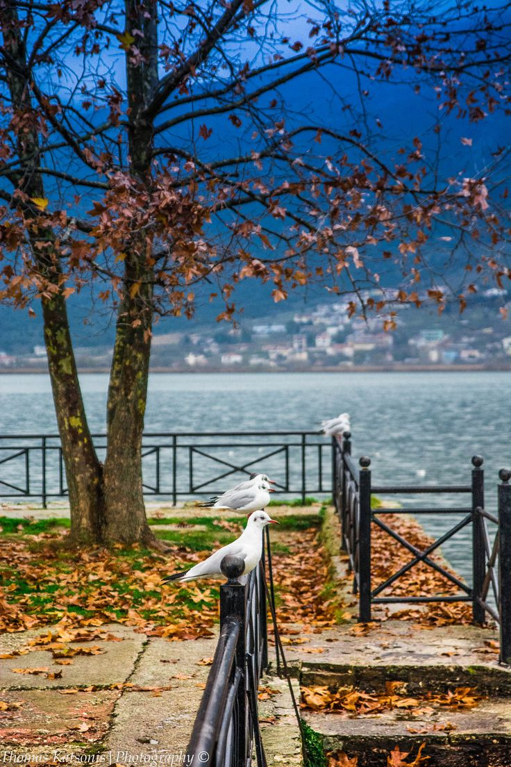 Ioannina lake in autumn, Greece