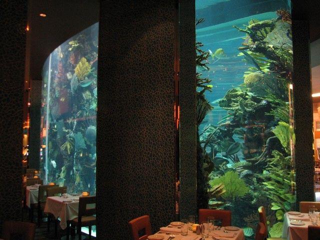 15 best tanked images on pinterest fish tanks aquariums for Fish tank las vegas