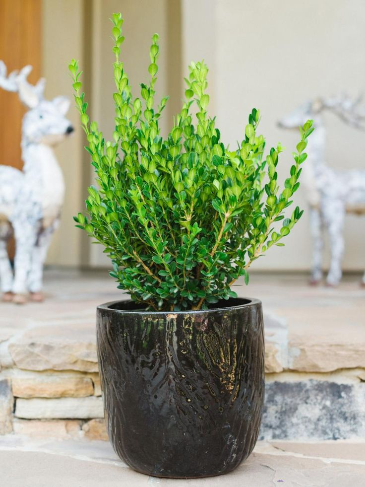 Attractive Winter Friendly Patio Plants