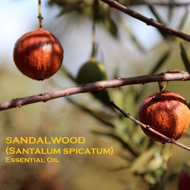 E/O: Sandalwood (Santalum spicatum) Essential Oil (100% Pure, Grade 1 Organic) - 5ml