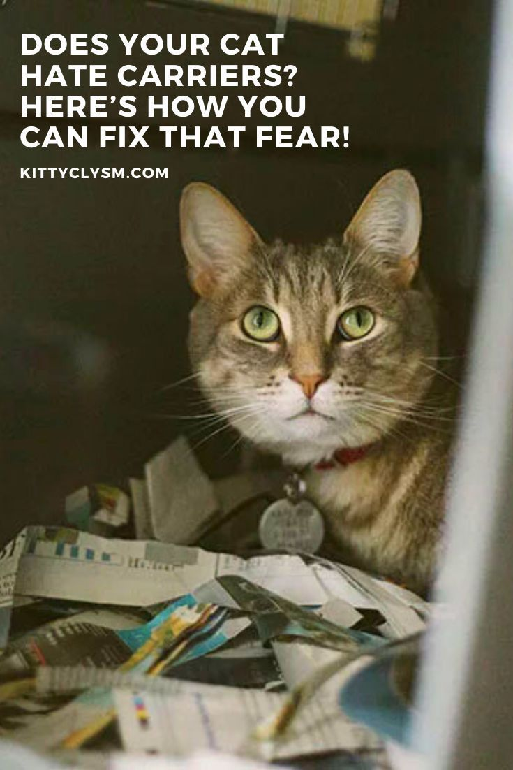 Pin On Cat Obedience School Training Tips