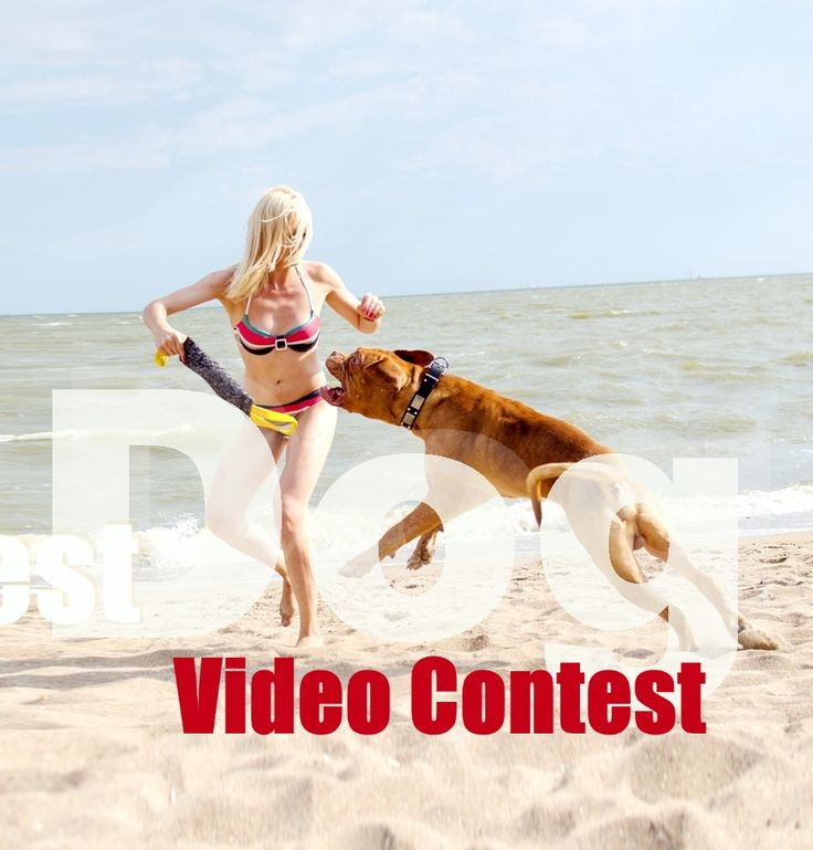 dog video contest