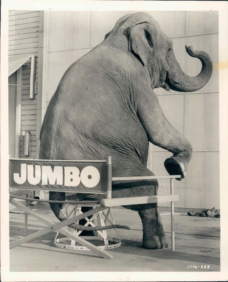 1962 Syd the Elephant, Star of MGM's Movie Billy Rose's Jumbo