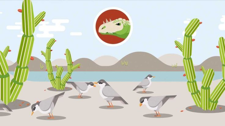 HOW EVOLUTION WORKS:  This well animated and well explained video uses simple but neat graphics to explain how evolution works.  11:48 minutes.