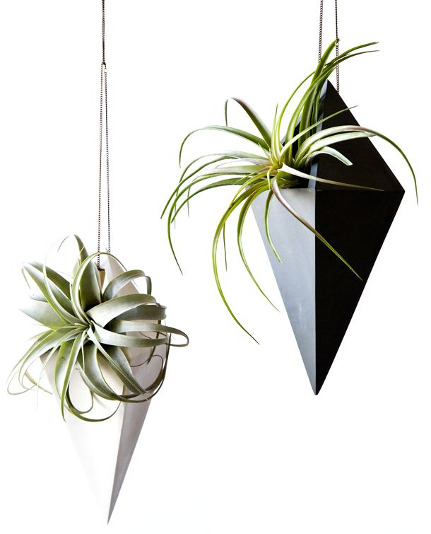 Must-Have: Air Plant Holder: Ballast Air, Hanging Air Plants, Ceramics Idea, Airplant, Ballast Lighting, Plants Holders, Franzen Photography, Farrah Sit 0329, Hanging Planters