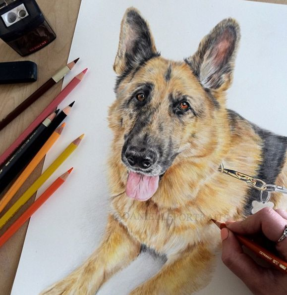 25+ Best Ideas About Animal Pencil Drawings On Pinterest