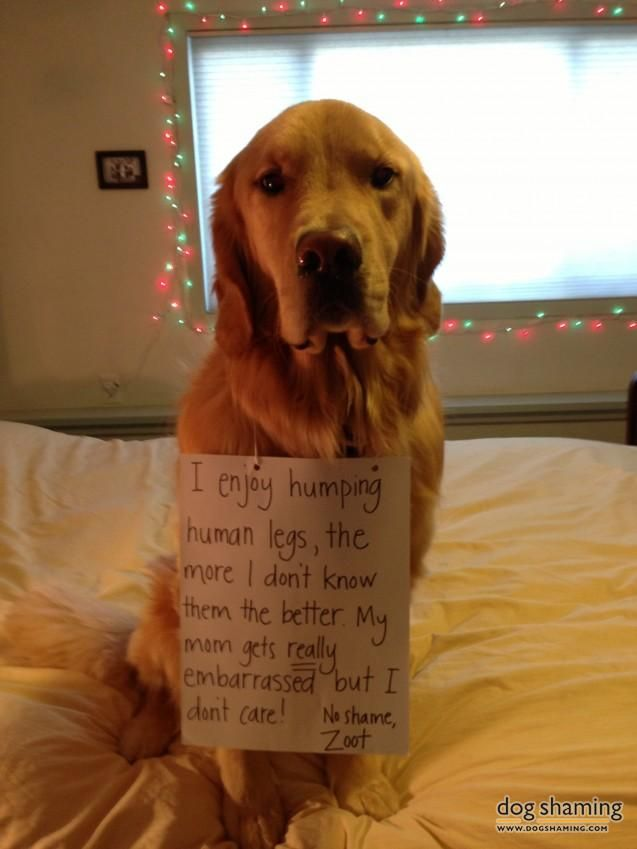 1000 Images About Hall Of Shame Pet Shaming Funnies On