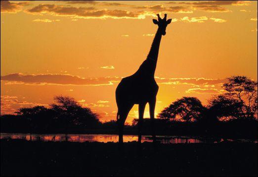 Google Image Result for http://thesummerlad.com/wp-content/uploads/2011/06/africa-travel.jpg