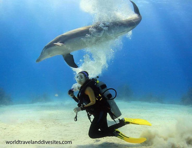 UNEXSO diving with dolphin, Grand Bahama. Check for more at http://worldtravelanddivesites.com/
