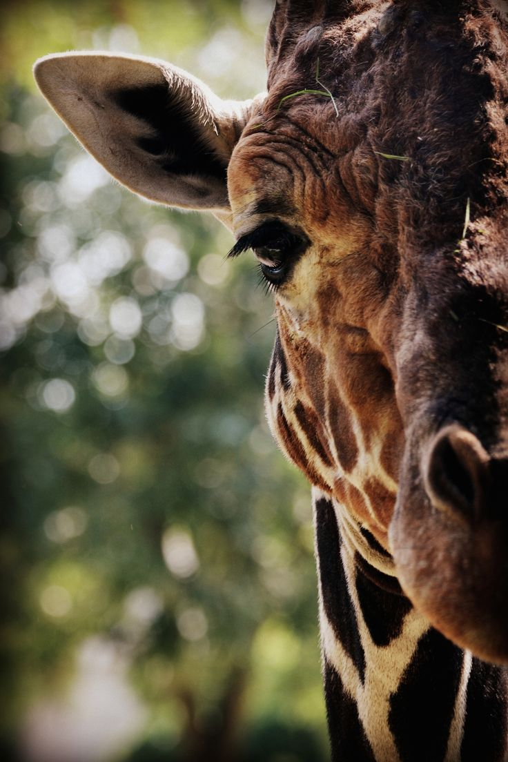 Zoo Duisberg by(Flavia Foresta)