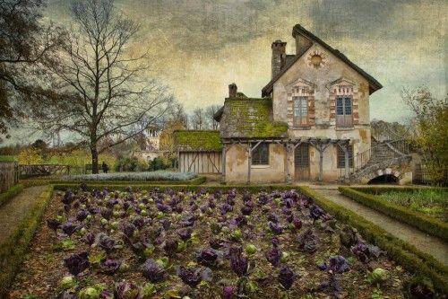 The vegetable garden by Helena Adelmann