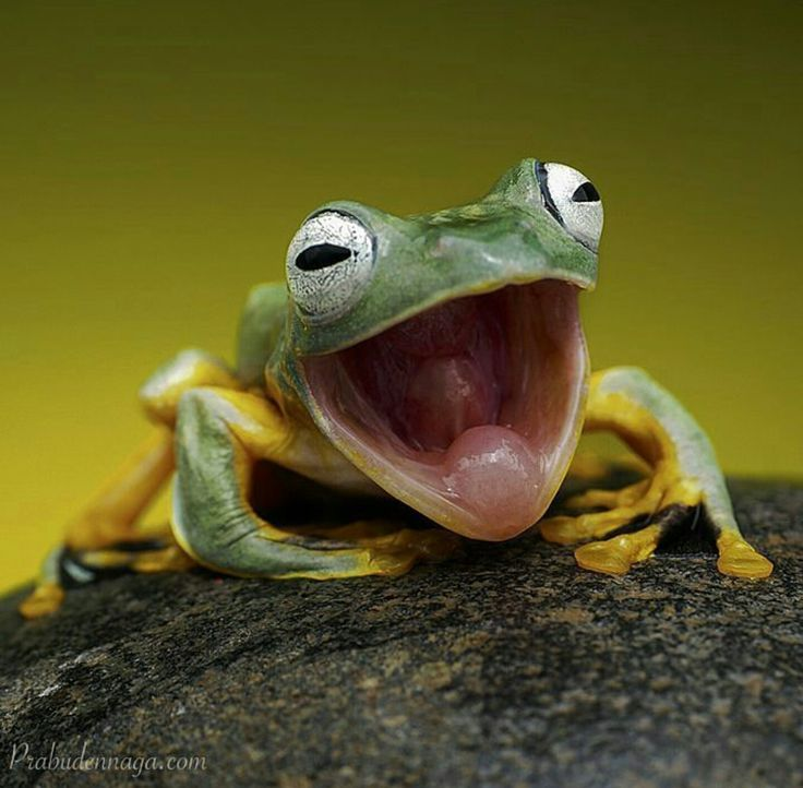 Best Its Not Easy Being Green Images On Pinterest Jokes - Real life kermit the frog discovered in costa rica