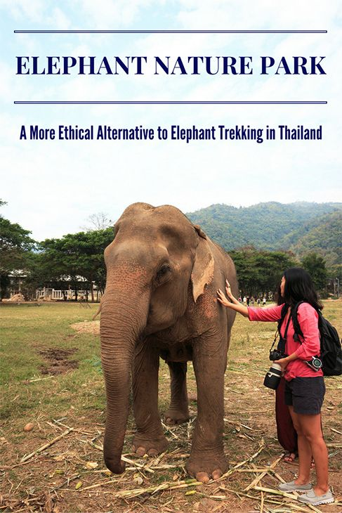 How I spent my day at Elephant Nature Park, an elephant rescue and rehabilitation centre where endangered Asian elephants roam in near freedom after years of abuse in the tourism and logging industries.