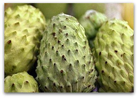 Outro dia, meu marido foi ao sacolão e voltou com uma fruta estranha, desconhecida. Verde clara, a fruta tinha a casca rugosa e pontiaguda, lembrando um pouco a graviola. Tratava-se de uma atemoia,…