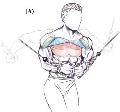 CROSSOVER  Objetivo do exercício: Desenvolver a parte interna dos músculos peitorais.