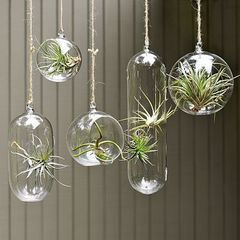 Wedding Decorations - Hanging glass ball 7.5cm - with hole for flowers etc for R45.00