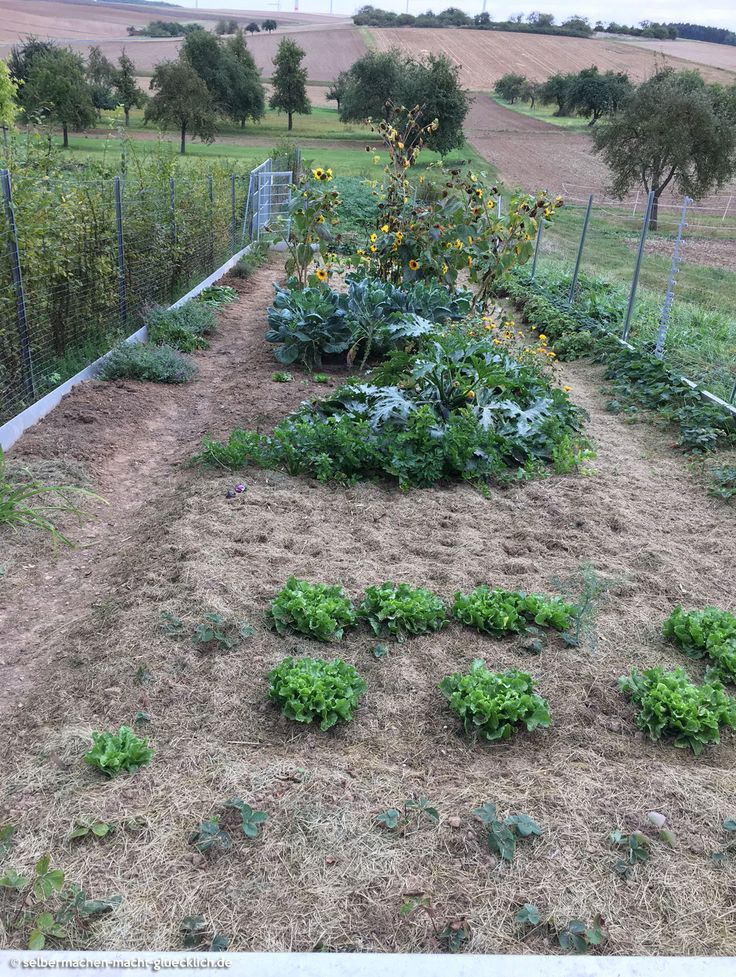 Die 25+ Besten Ideen Zu Mulchen Auf Pinterest | Gärtnern Und Tipps ... Bodenverbesserung Garten Mittel Tipps