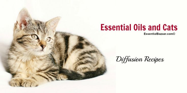Find a list of frequently asked questions about diffusing essential oils around cats. With tips, explanations and even blend ideas for your kitty.