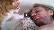 Animali domestici: cani, gatti e curiosità sugli animali