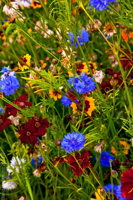 Olympic Wild Flowers 2012