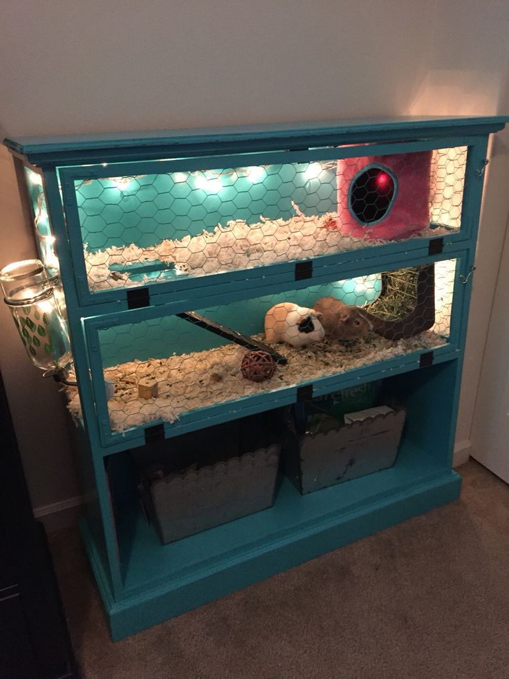 Guinea Pigs The Perfect Pet Repurposed Dresser And Hedgehogs