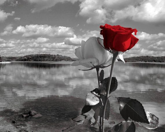 Black White Red Rose Lake Landscape Photography Wall Art ...