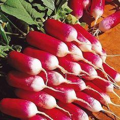 4 хитрости выращивания крупного редиса!
