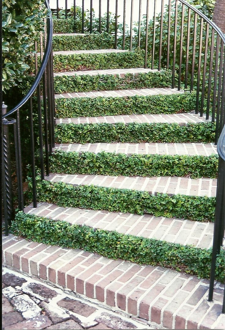 The natural stone steps of a stairway garden feature climb a small - This Green Groundcover Looks Great Aginast The Contrast Of The Dark Red Brick Stairs The Iron Railing Isn T