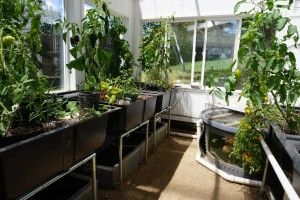 10 Do's and Don'ts of an Aquaponics Greenhouse #aquaponics #greenhouse #energyefficient