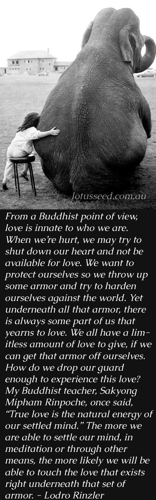 Buddhist Quotes On Love Best 25 Buddha Quotes Love Ideas On Pinterest  Buddha Quote