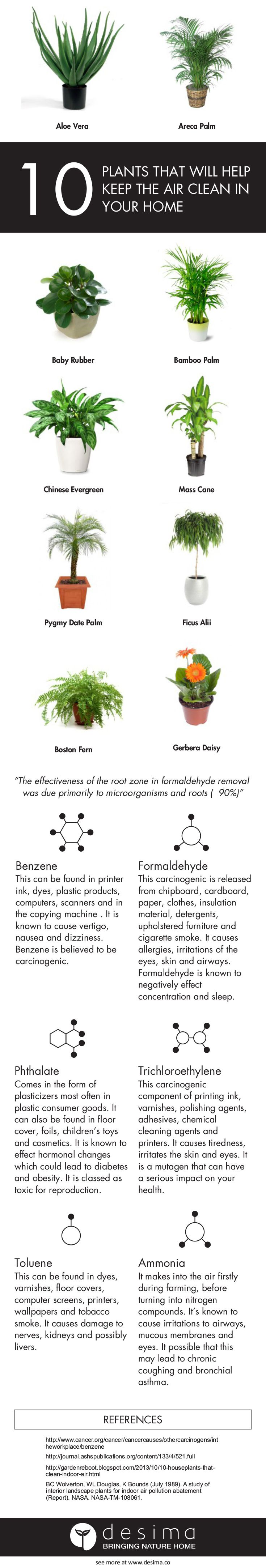 10 Plants That Will Help Keep The Air Clean In Your Home — desima