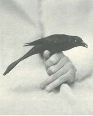Black and White : Mute they are, and high in flight, in the great night of man. We are a long way now from decoration.