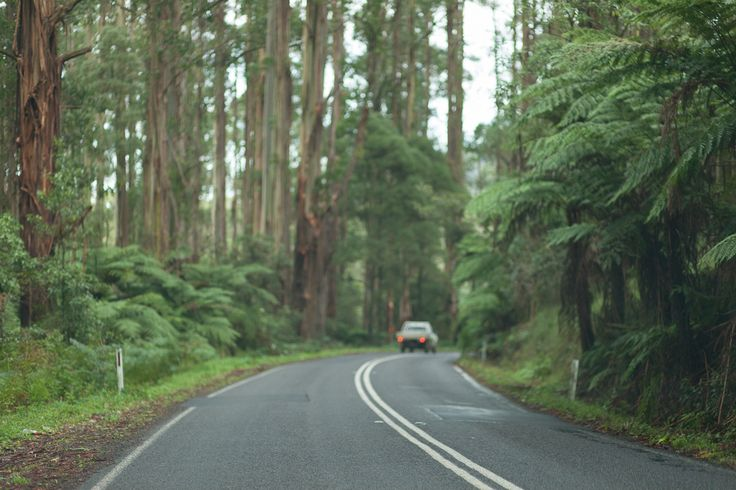 Driving through Dandenong Ranges, Victoria | Flickr - Photo Sharing!