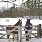 horsesTreats For Horses, Horses Wait, Horses In The Snow, Horses In Snow, Horses In Winter, Horse In Winter Snow, Quarter Horses, Percheron Horses, Snowy Horses